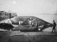 whales-text-wp