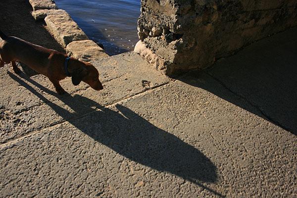 daschund-shadow
